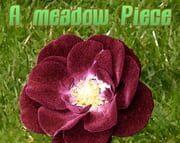 A meadow Piece